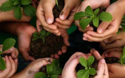 Proyecto: Se Planta Arroyo